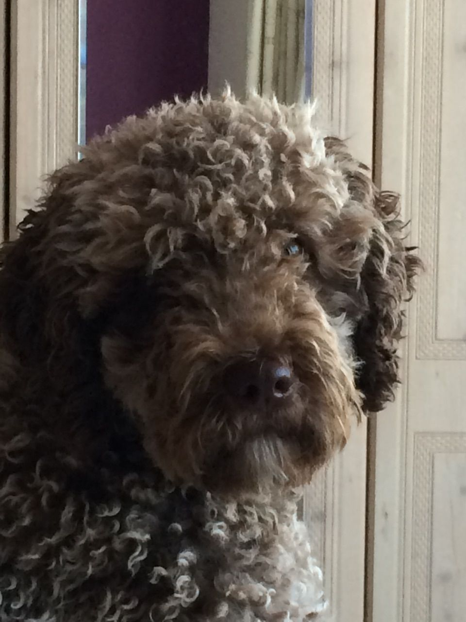 My Spanish Water Dog Antieke Sieraden Antiek