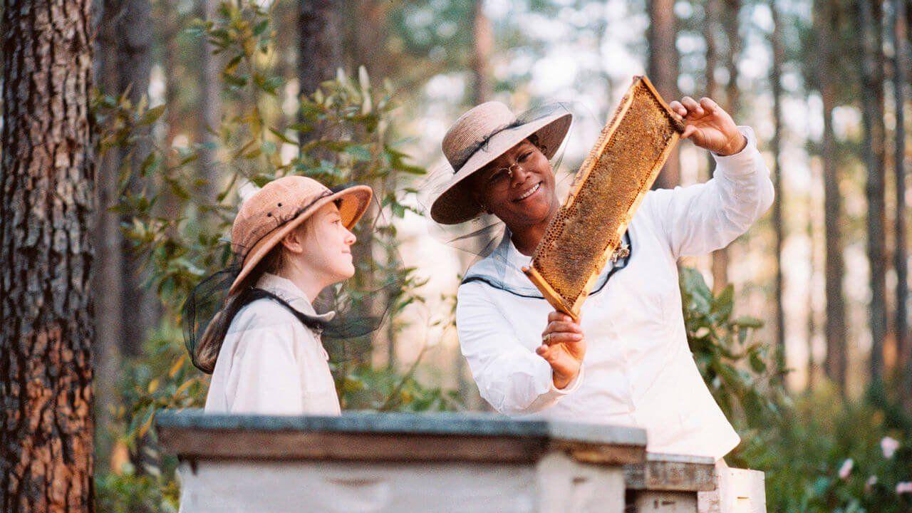фильмы о пчелах это был