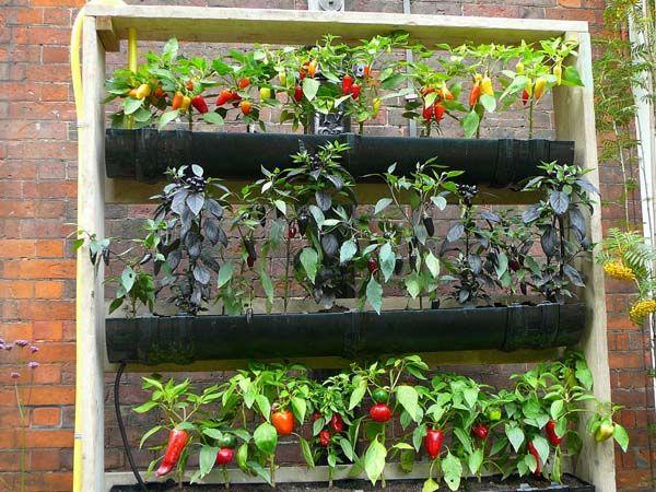 13 Creative and Innovative rain Gutter Garden Ideas   Gutter ... on rain gutter gardening larry hall, gutter gardening larry hallrain designs, rain gutter gardening books, rain gutter gardening supplies,