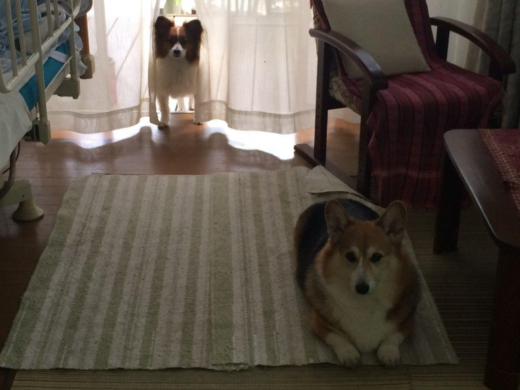 犬のノミ マダニを見つけたら 獣医さんから教わった取り方や駆除法 症状 病気を徹底解説 マダニ ノミ 犬