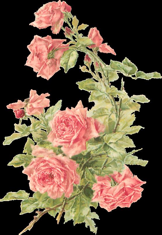 Catherine Klein Peach Roses Digital Elements Catherine Klein Vintage Roses Vintage Flowers