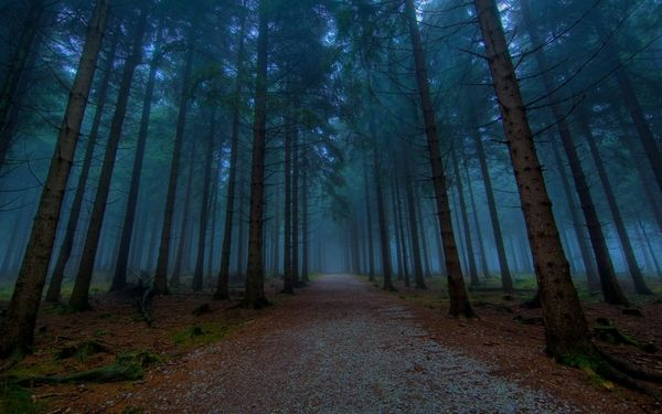 Landscapes Nature Trees Forest Roads 1920x1200 Wallpaper