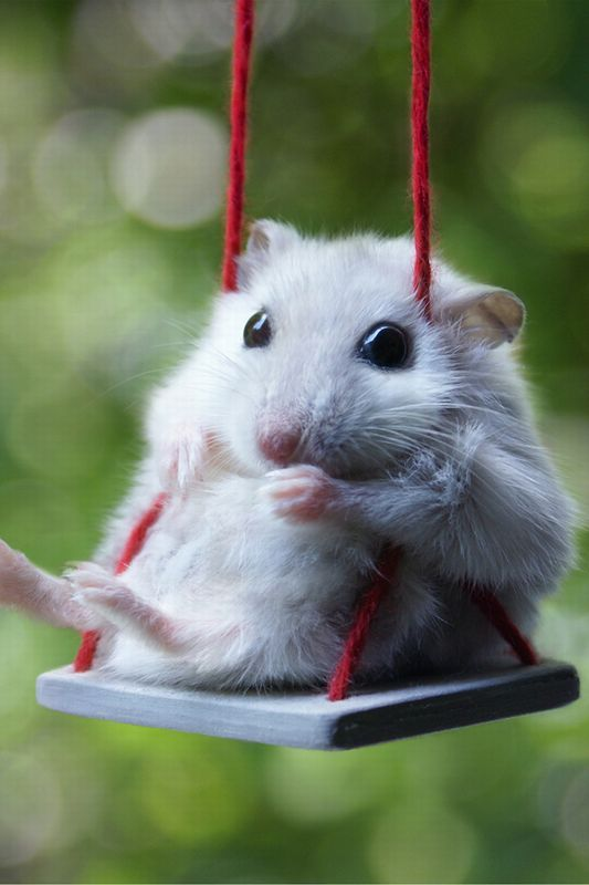 12 Weird Things All Cat Owners Have Definitely Done Cute Animals Funny Hamsters Funny Animals