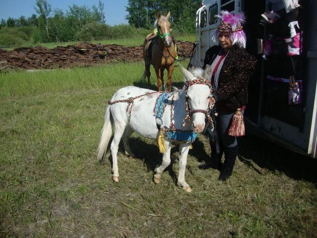 Zorse For Sale >> Zorse For Sale White Gelding For Sale Horse Classifieds