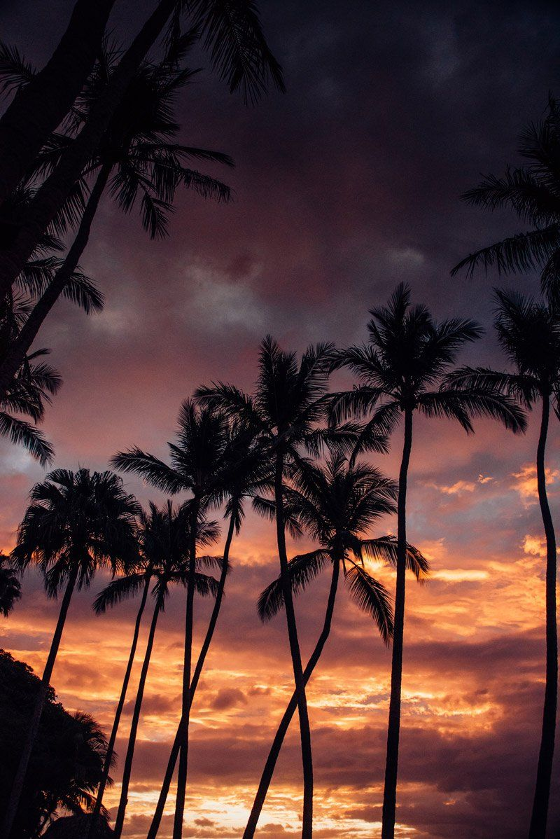 Palm Tree Sunset In Costa Rica Samba To The Sea Silhouette Trees Sunsets Beach Ocean Photography