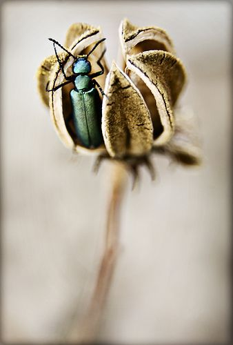 Beetle and seed pod by Andrea Matrix