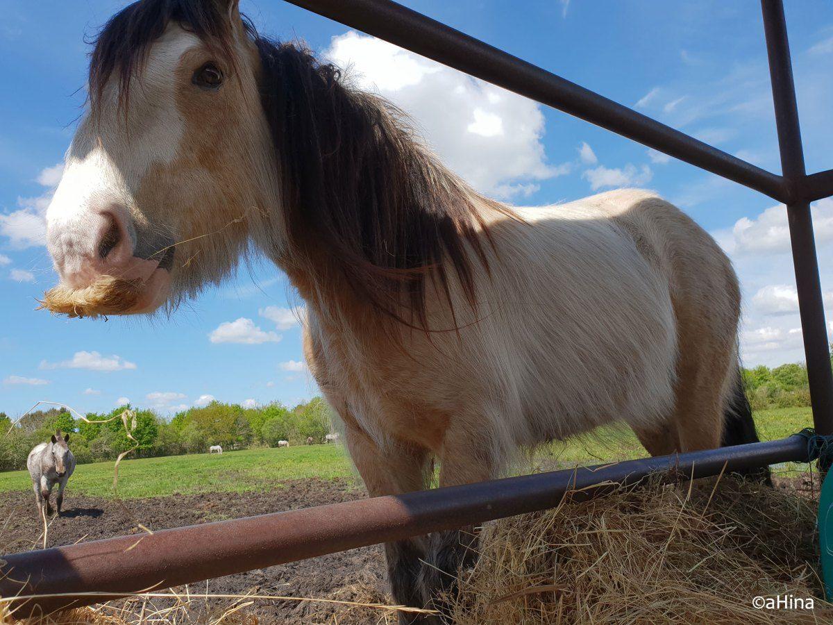 Epingle Sur Horse