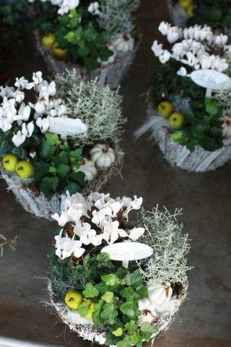winter flower composition fleurs d 39 hiver compositions blanches noel pinterest. Black Bedroom Furniture Sets. Home Design Ideas