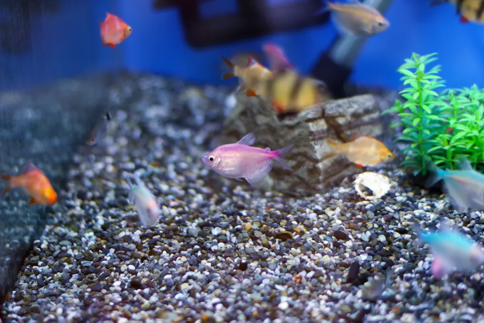 How To Get Rid Of Ick In Fish Tank