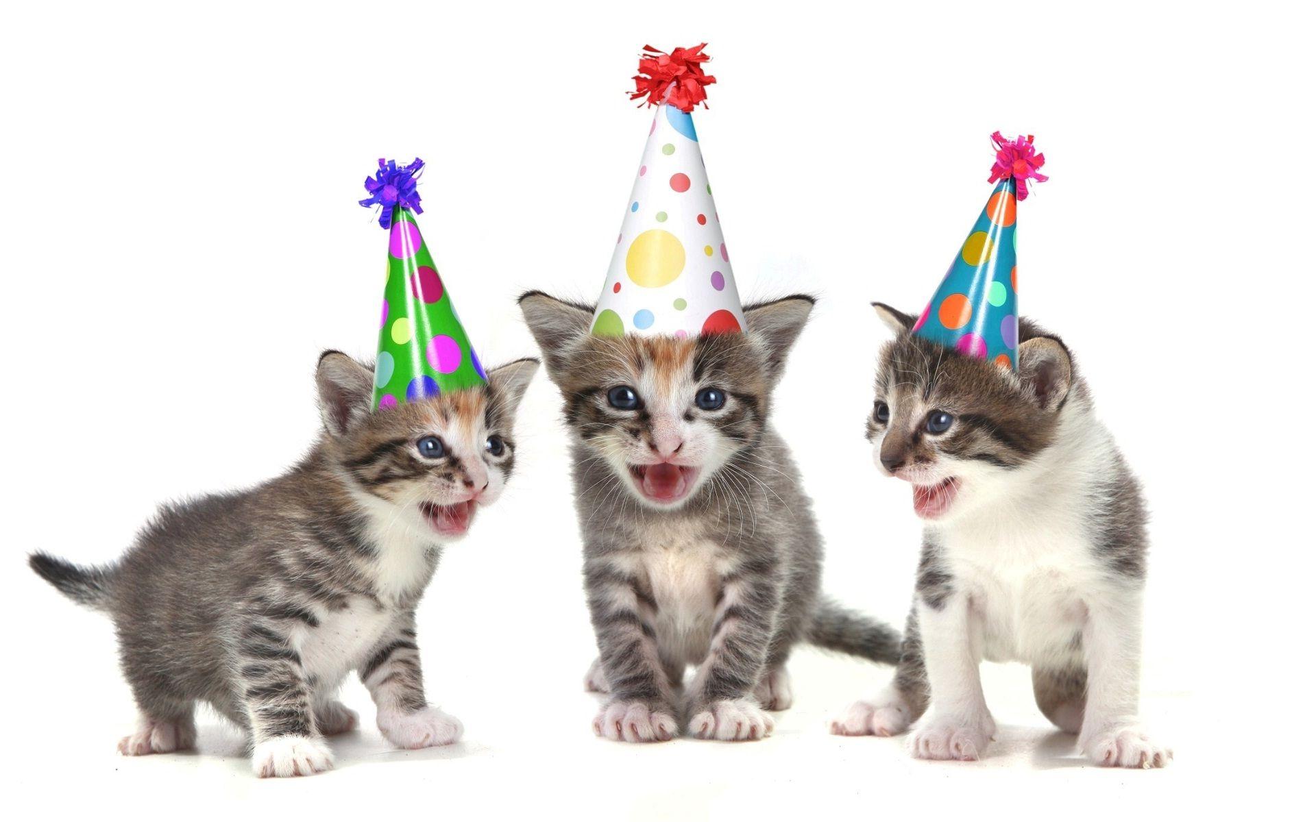 wishing you a happy birthday  funny cats wish you happy