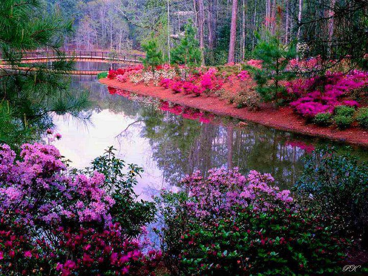 Amazingly Beautiful Beautiful Gardens Beautiful Flowers Garden Sacred Garden