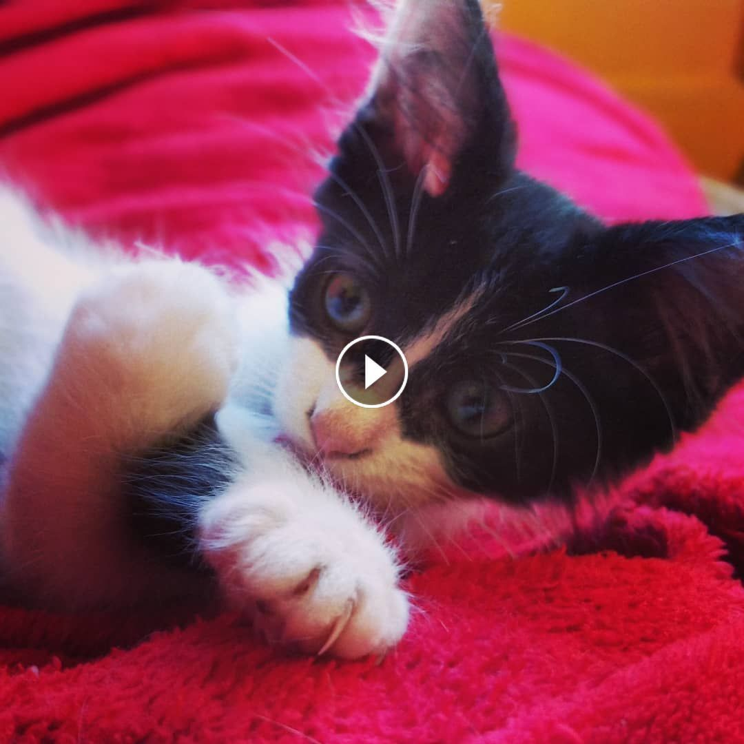 Kittens Meowing Too Much Cuteness All Talking At The Same Time Kitten Meowing Laughing Cat Lost Cat