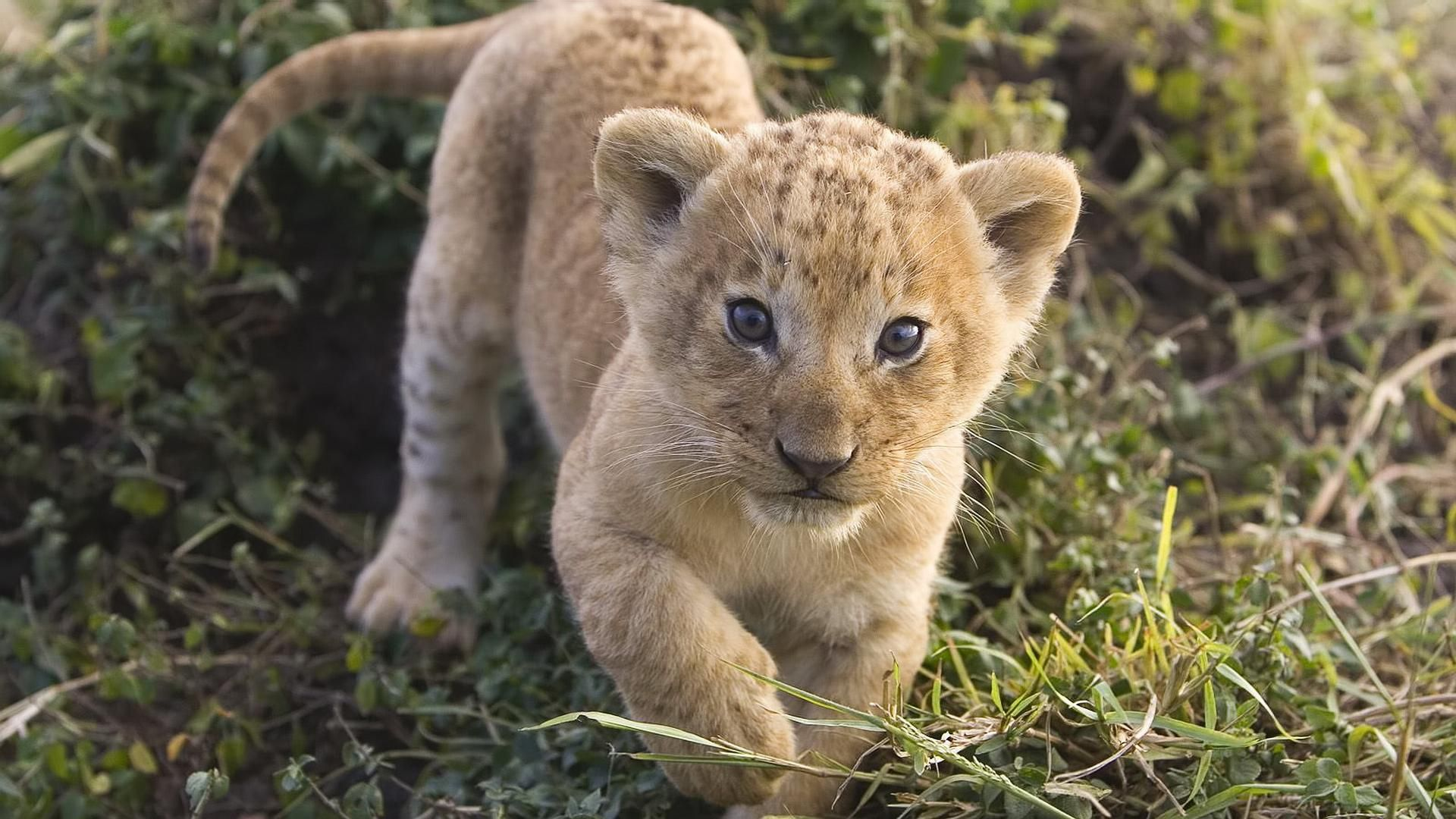 Image result for cute lions