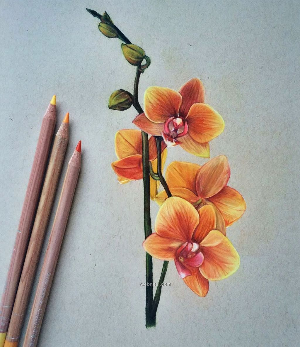 50 beautiful color pencil drawings from top artists around the world read full article