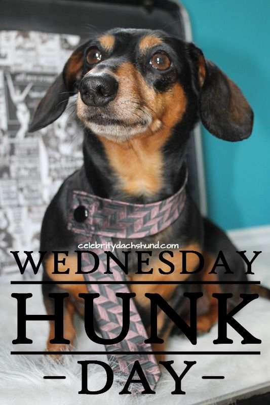 Today S Wednesday Hunk Is Sprocket From Canton Ohio Weiner Dog