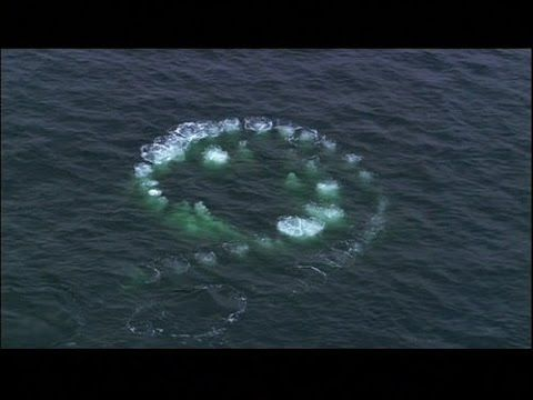 UFO Documentary :  수중 UFO의 존재에 대한 비밀 문서 - USO Full