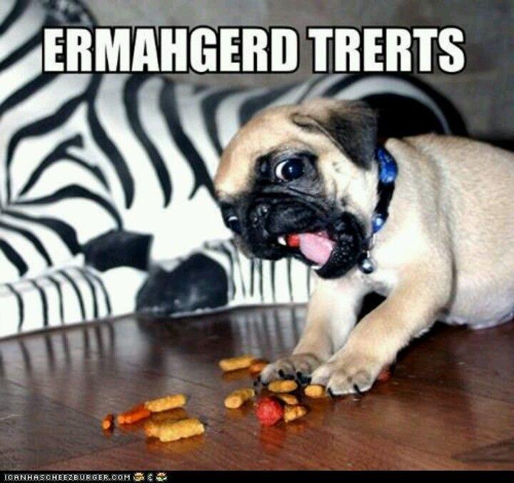 Should We Do An Ermahgerd Photo At Your Wedding Cute Pugs