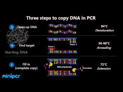 What are the differences between PCR, RT-PCR, qPCR, and RT-qPCR?