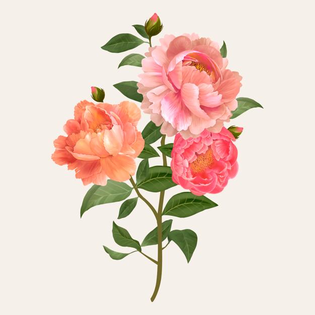 Pobierz Vintage Kwiaty Bukiet Wektor Za Darmo Peony Illustration Plant Illustration Watercolor Flower Illustration