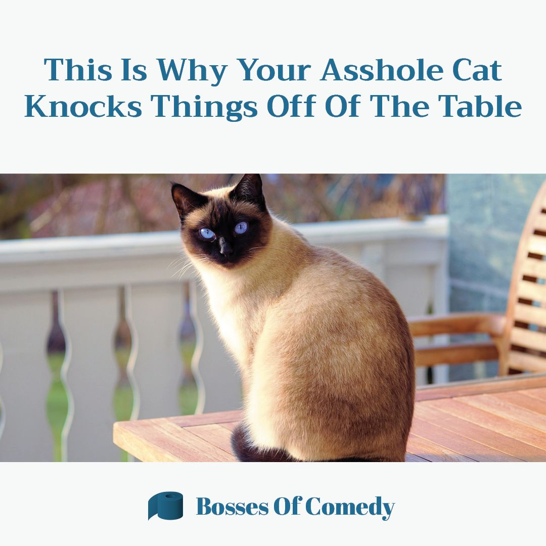 Your cat slowly pushes a fragile object off of the table ...