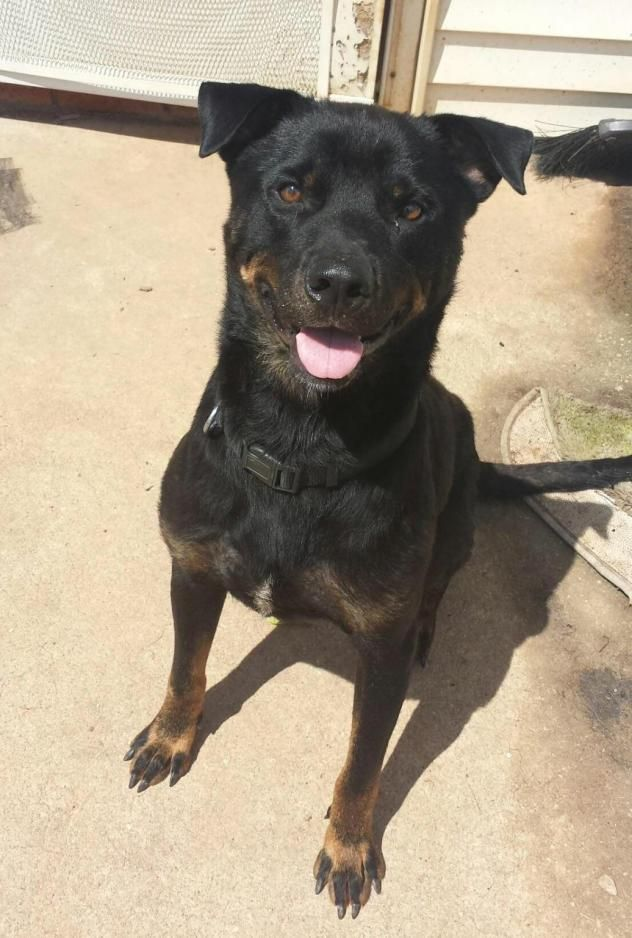 Adopt Max on Rottweiler dog, Dogs, German shepherd rescue