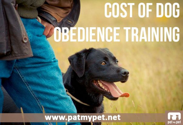 Cost Of Dog Obedience Training | Pat My Pet | Dog Training