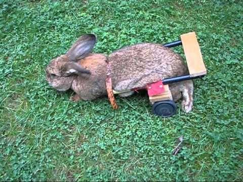 Kaninchen Rollstuhl Modell Superpelzroller Luxus Edition