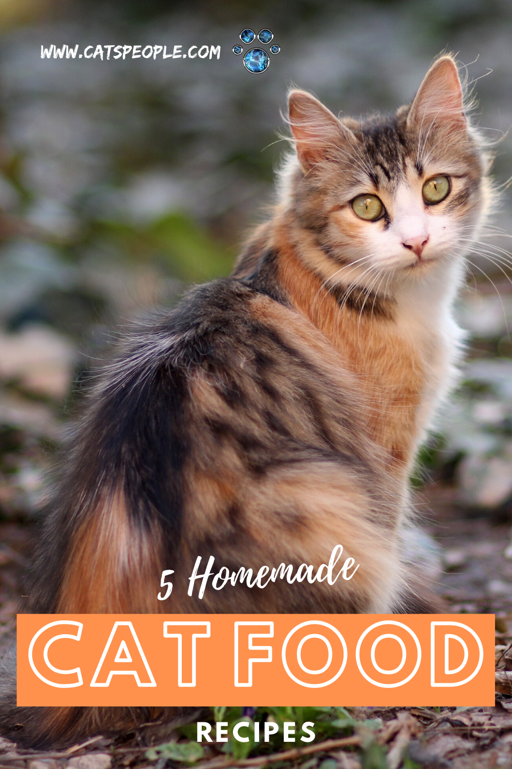 5 Homemade Cat Food Recipes Easy Cheap And Fun To Make In 2020 Cat Parenting Cats Homemade Cat