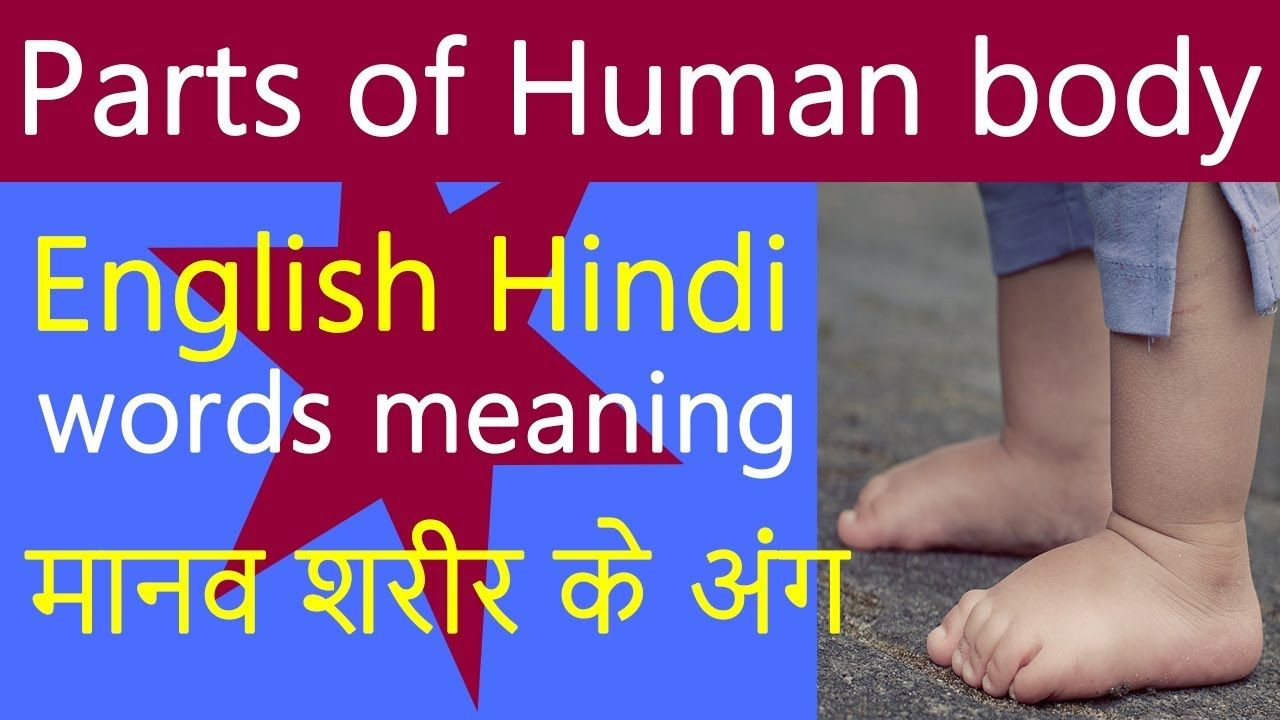 Body parts in English with meanings in Hindi Urdu | English