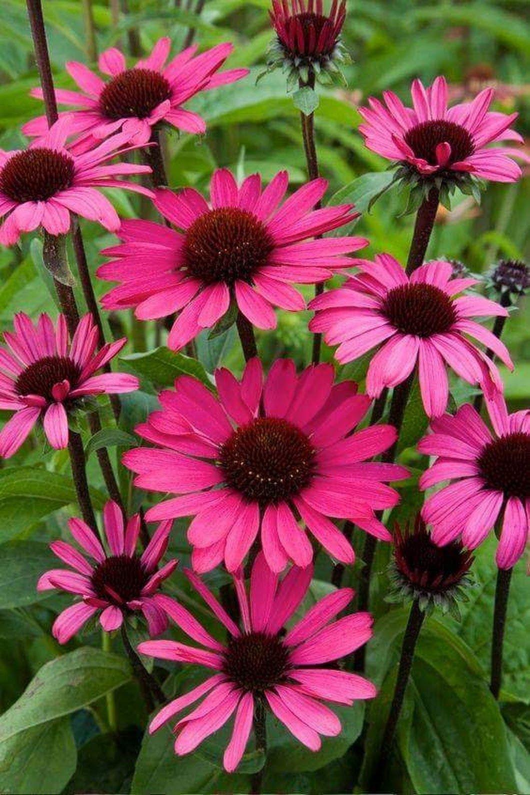 Садовые ящики цветов