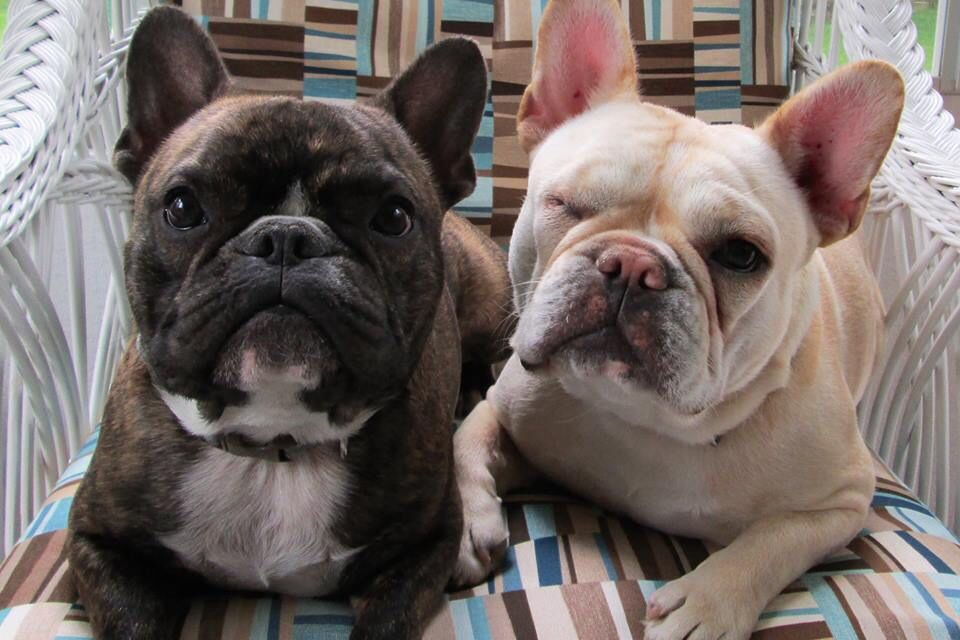 Soul Mates, French Bulldogs, now that's LOVE