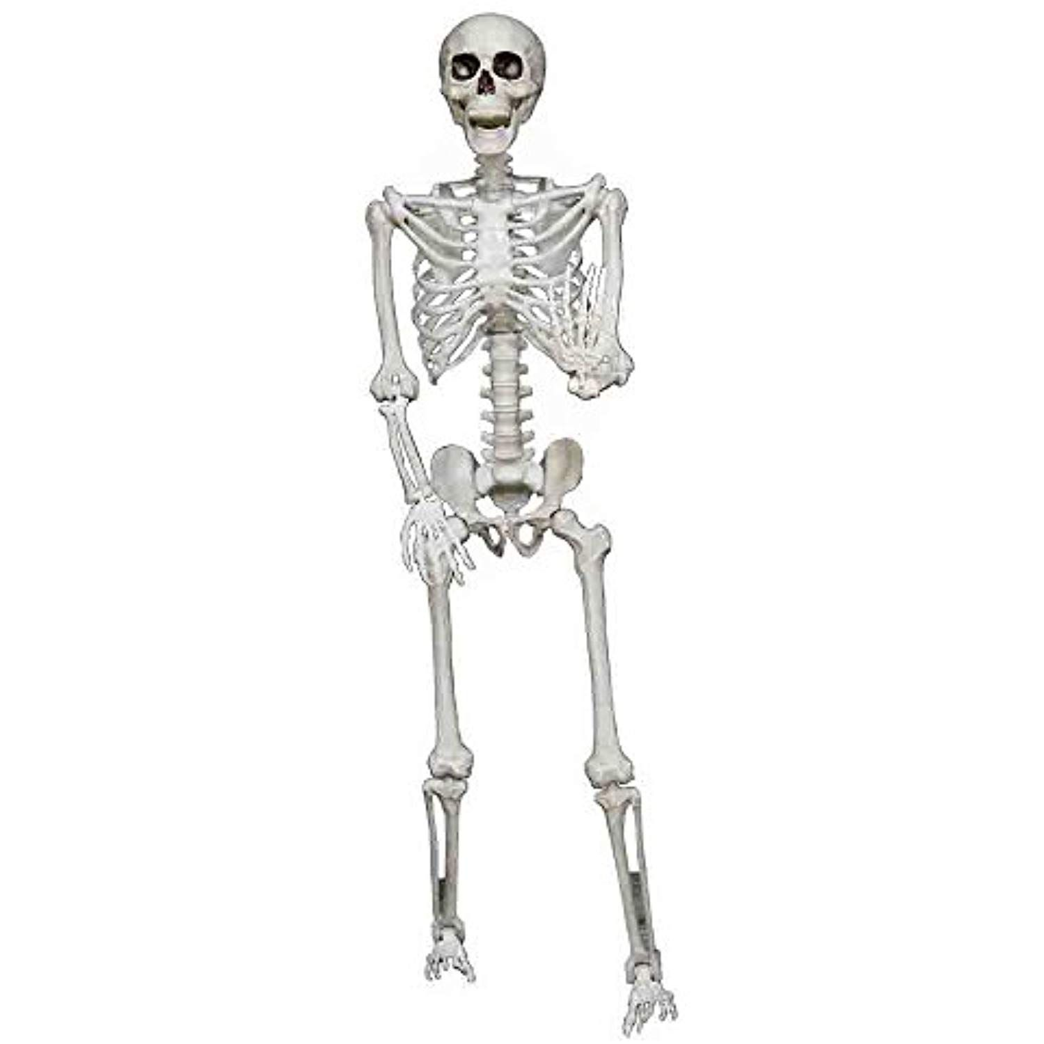 Realistic Pose and Hold Lifesize Skeleton Prop You can get
