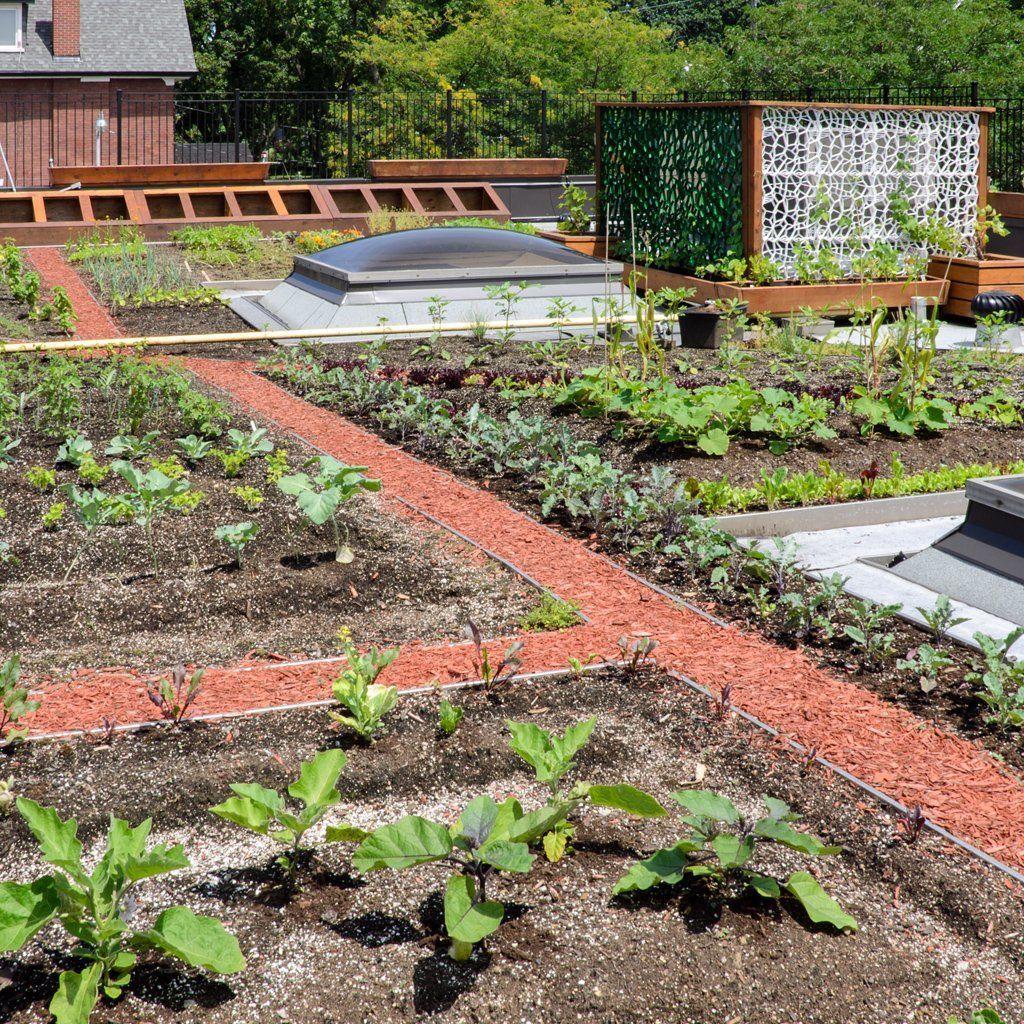 Urban Garden, Sustainable Garden, Garden