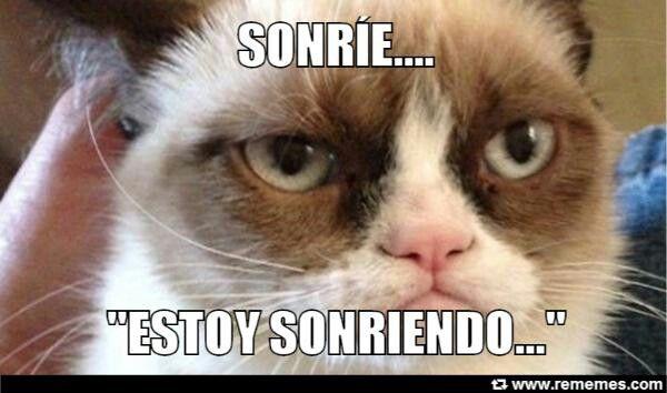 Estoy Sonriendo Meme Gato Grumpy Cat Memes Perros