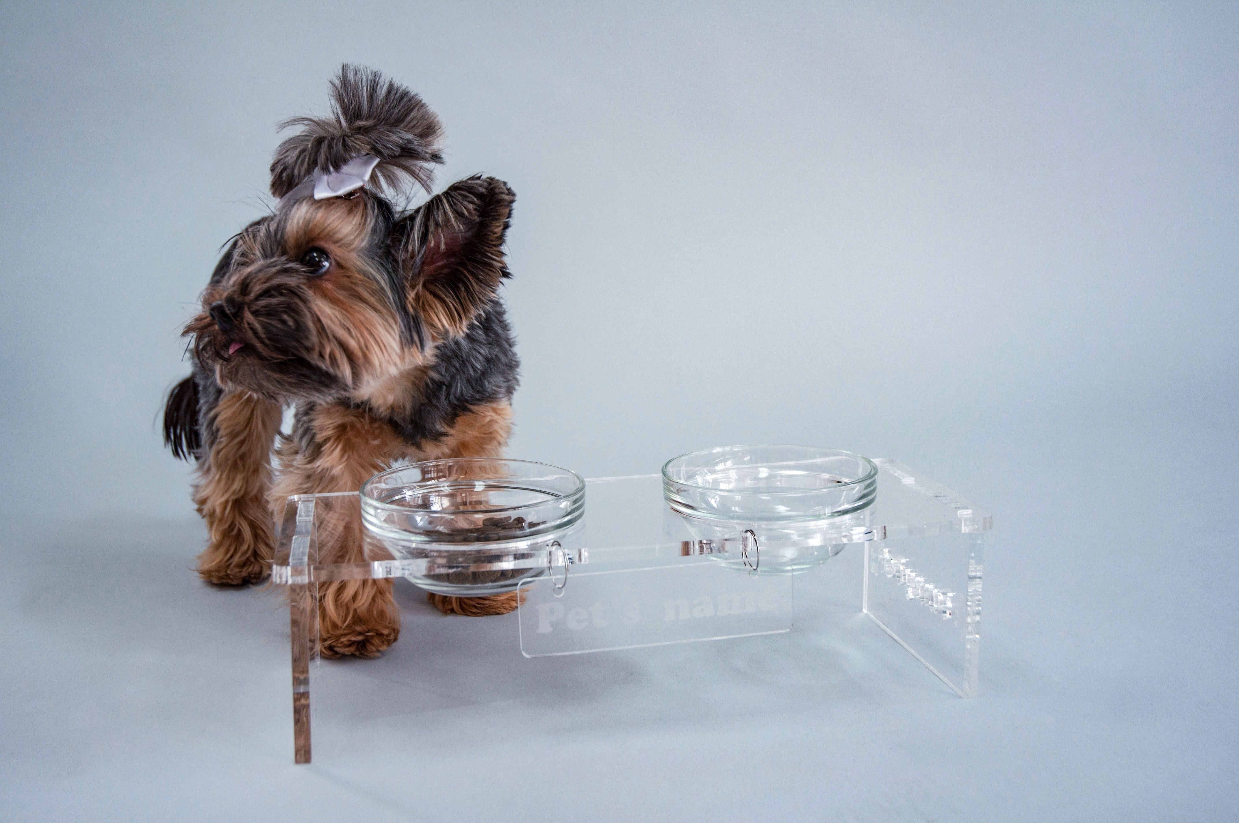 Pets Care - #petfeedingstation #yorkie #FunnyPet #catbowls #dogbows ...
