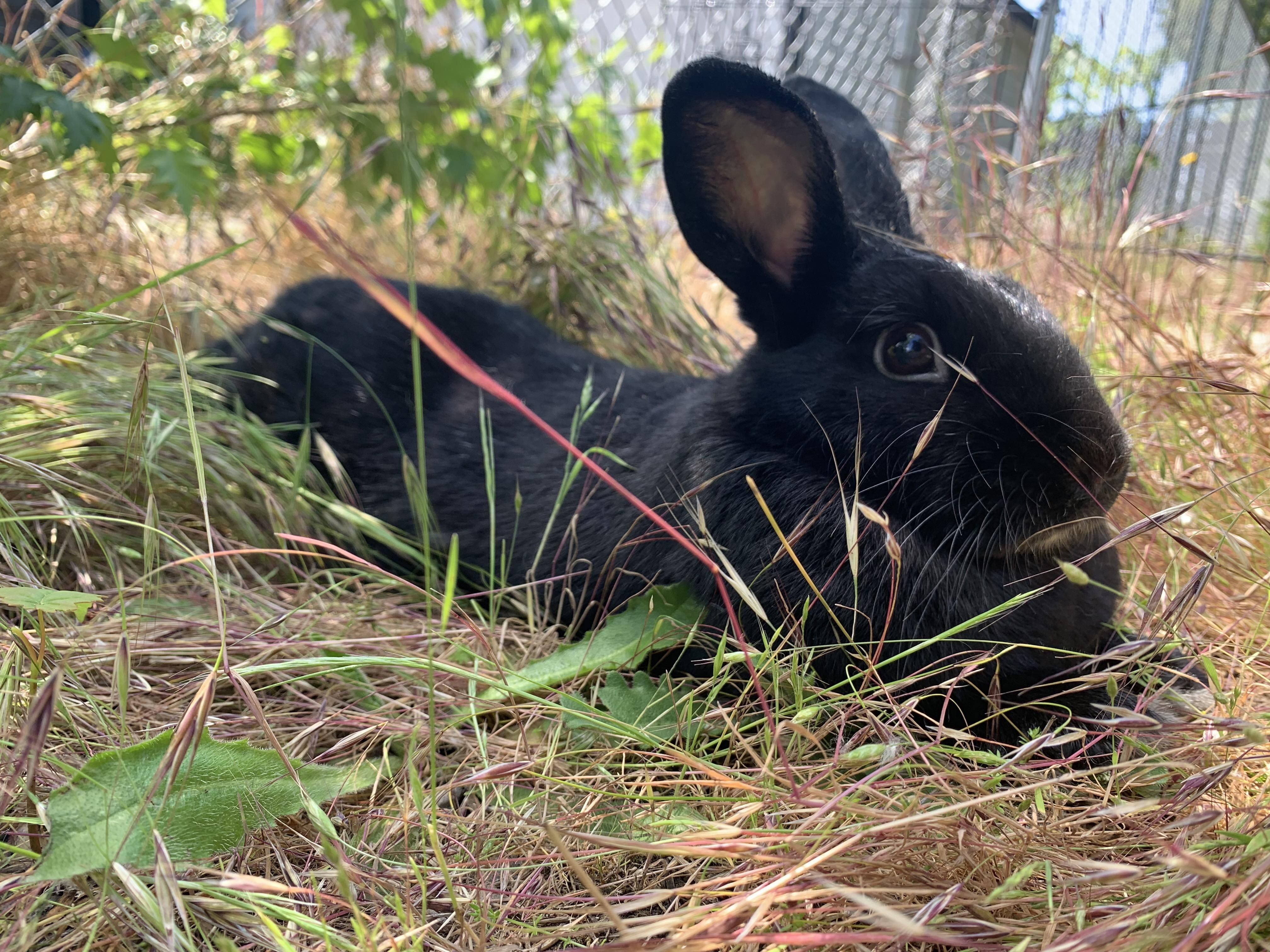 8 Things You Do That Upsets Your Bunny Pet Rabbit Pet Bunny