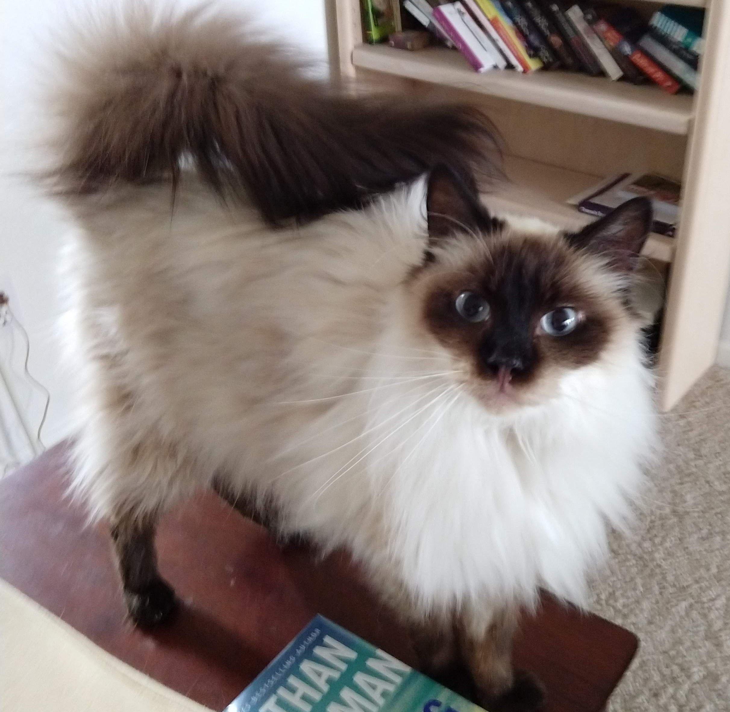 Adopt Mojo on Pet care tips, Pet adoption, Cats