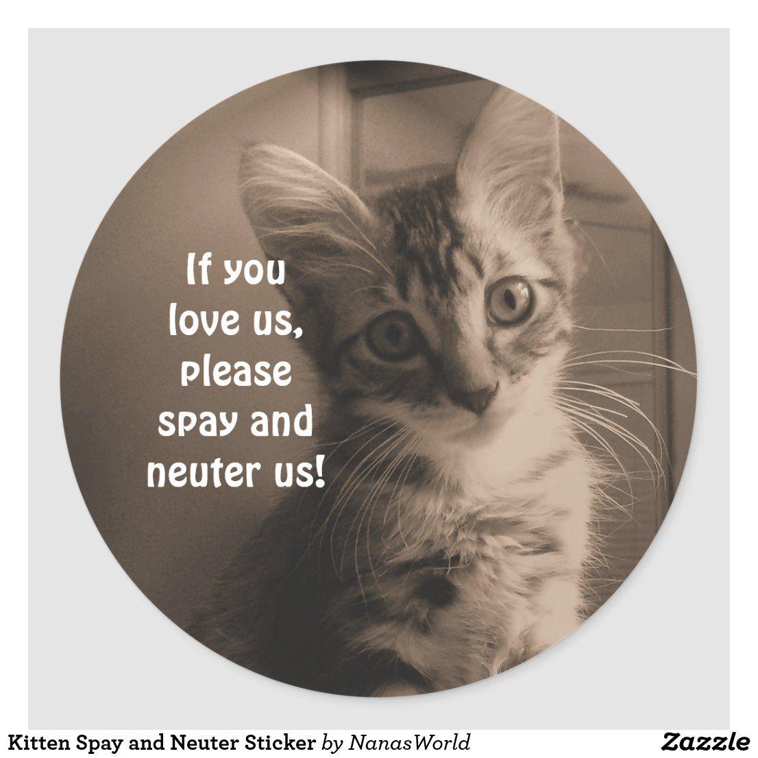 Kitten Spay And Neuter Sticker Zazzle Com In 2020 Spay Neuter Kitten
