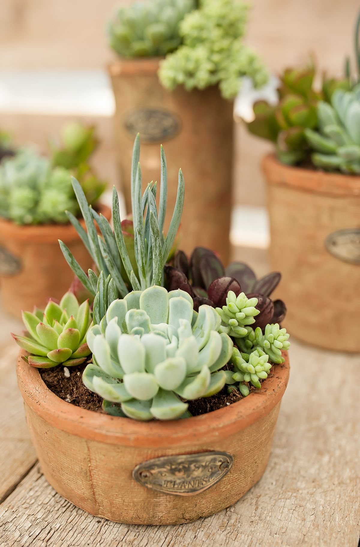 Top 5 Care Tips For Happy And Healthy Succulents Succulents