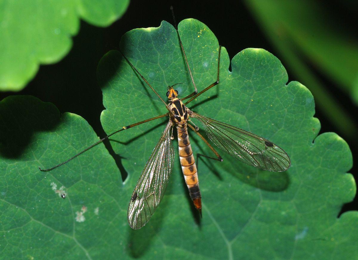 Despite their colloquial moniker, flies do not prey on