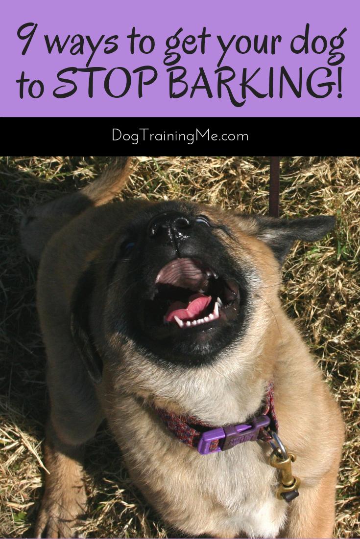 How To Stop Dog Barking Stop Dog Barking Dog Training Obedience Dog Biting Training