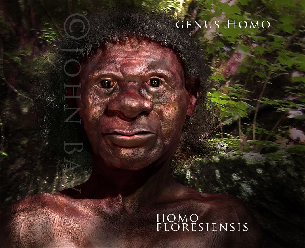 Pin On Hominids