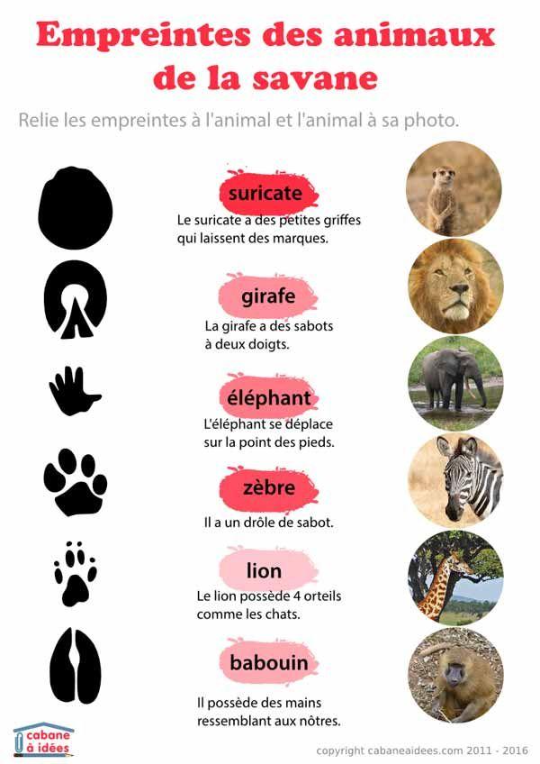 Comment reconna tre des empreintes d 39 animaux animaux - Difference entre pin et sapin ...