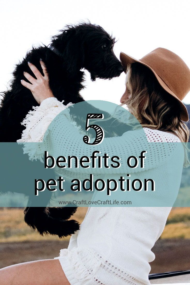 5 Benefits of Adopting a Pet - Shelter Animals #petadoption