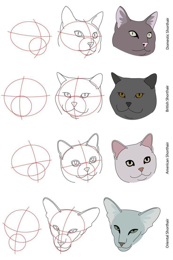 Pin by aleksandra Gourovanidou on Γάτες | Pinterest | Drawing ideas ...