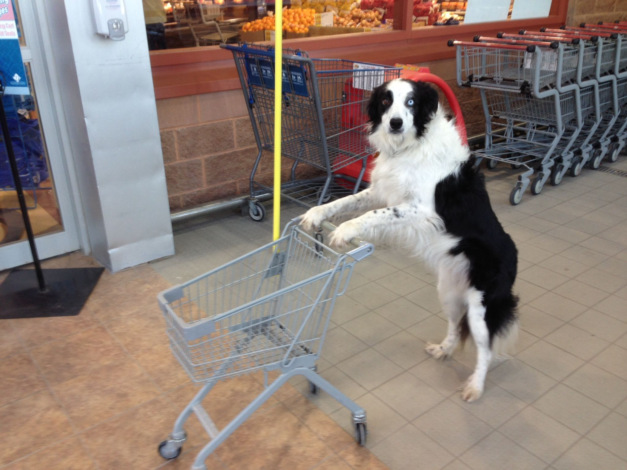 Pin By Soosyn On Animal Smiles Border Collie Collie Cute Puppies