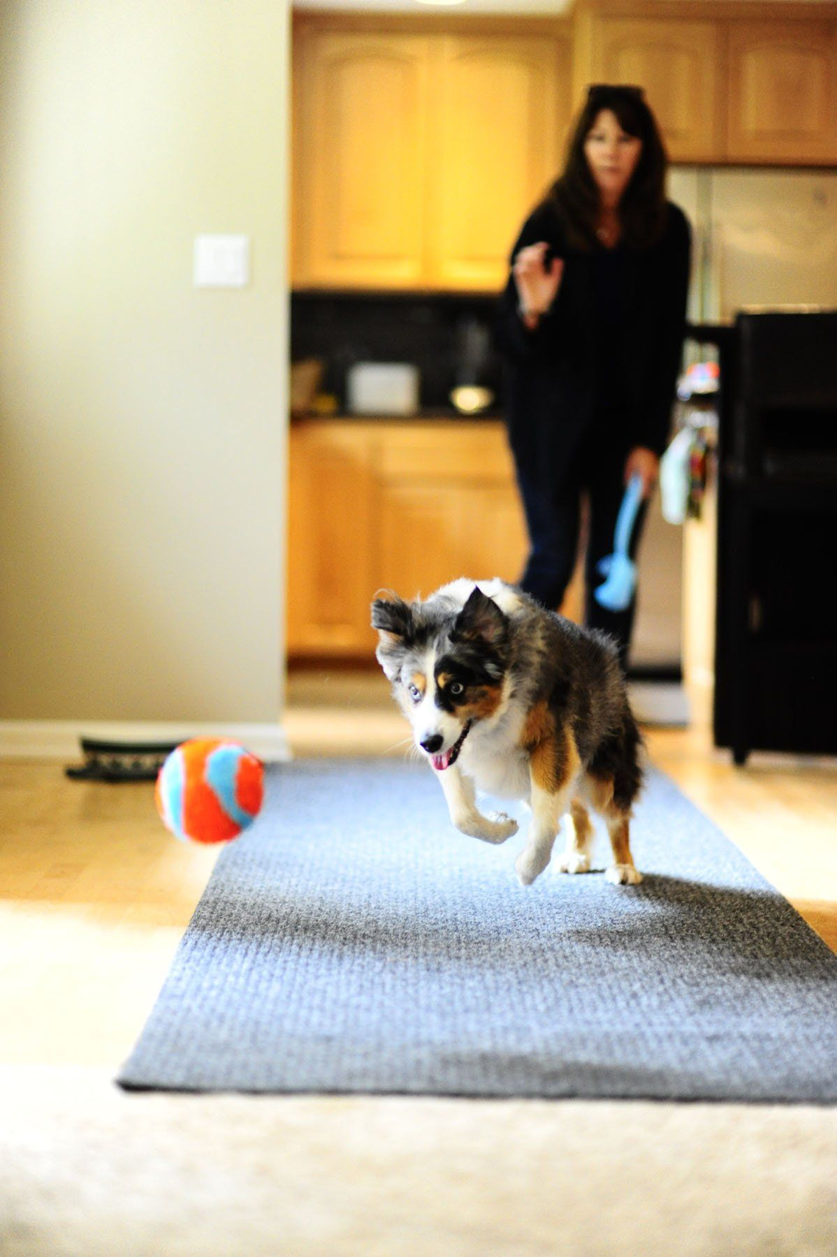 Chuckit Indoor Ball Read More Reviews Of The Product By Visiting The Link On The Image Note It S An Affiliate Link To Amaz Best Dog Toys Dog Toys Pet Toys