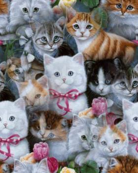 Pin By Amy S World On Cats And Kittens Kittens Cutest Kitten Wallpaper Cute Cats