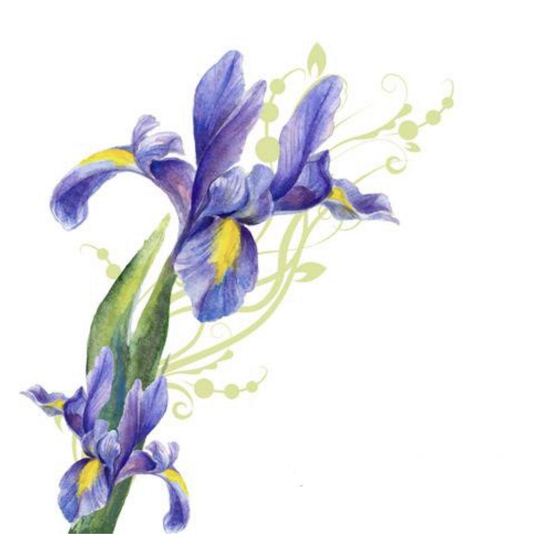 Pin By Live Laugh Love Ak49 On Iris Flower Iris Drawing Iris Flowers Paint Background