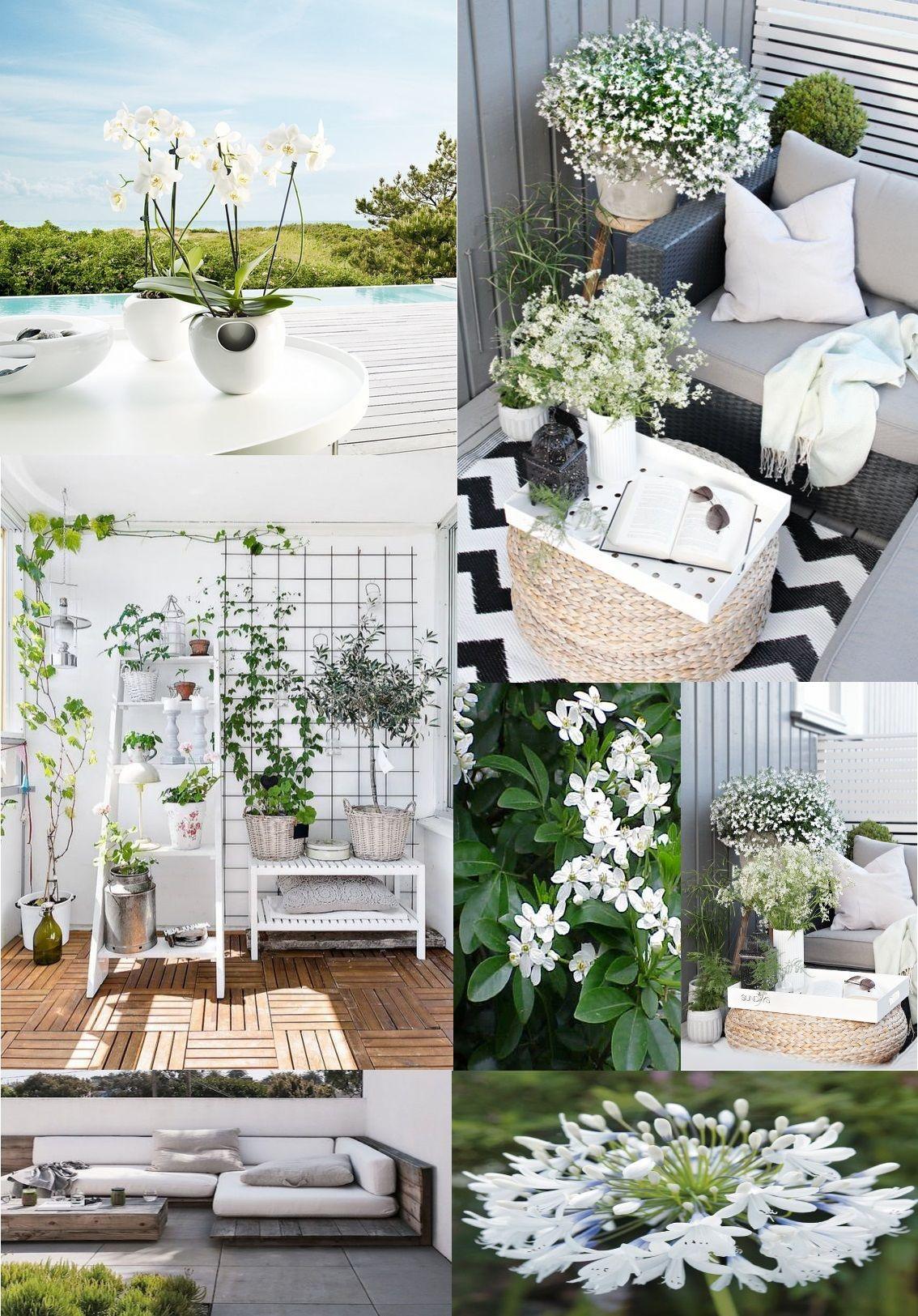 Bien choisir ses plantes d\'extérieur : Ambiance par couleur et ...